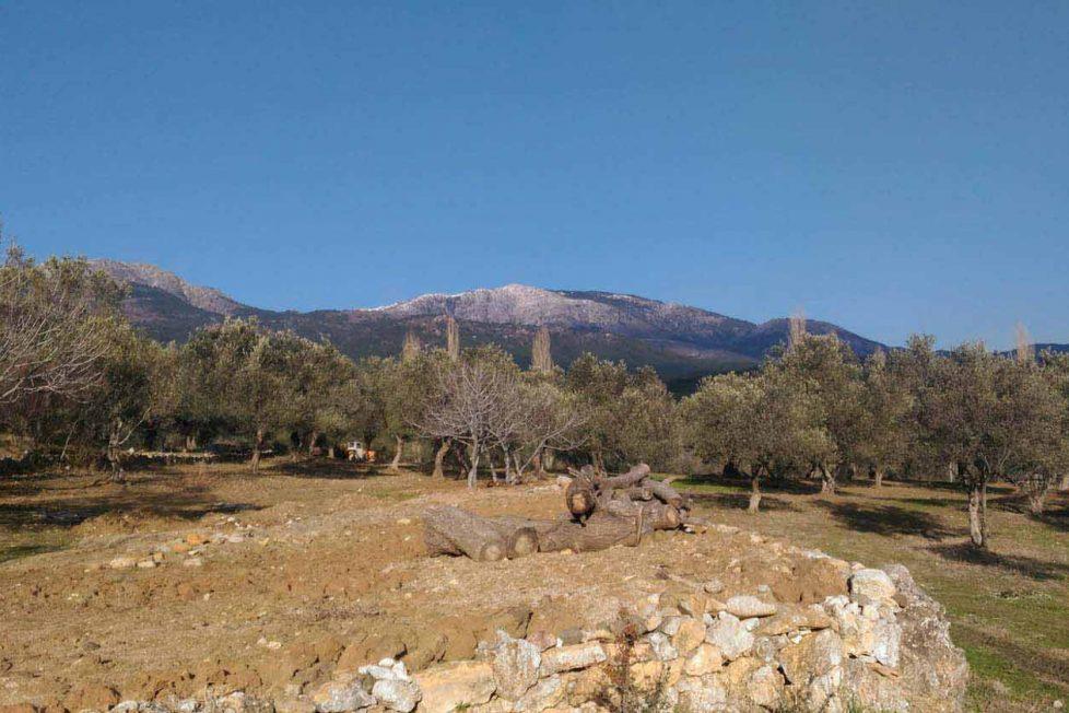 Göçebe El Sanatları'ndan yurt çadırı ve çatal zeytin hikâyesi