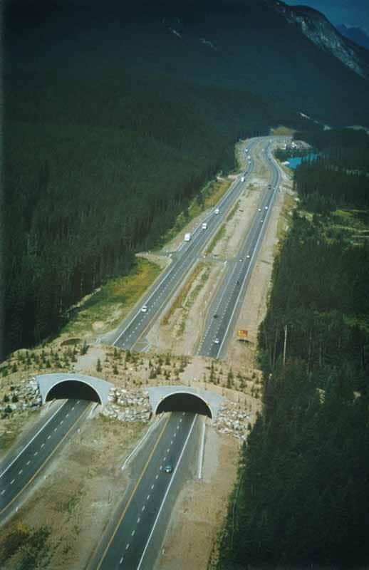 Trafikteki canlılar için ekolojik köprüler yapmalıyız