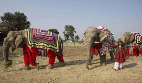 Filler üşümesin diye rengârenk devasa kıyafetler örüyorlar