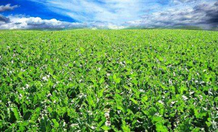 Sürdürülebilir tarım uygulamaları
