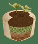 Bios Urn, siz öldükten sonra bir ağaca dönüşecek