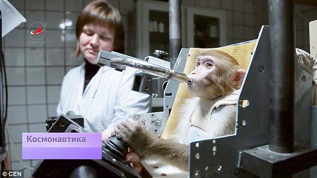 Rusya, uzaya dört maymun gönderecek