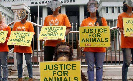 Büyük ihtimalle duymadığınız uluslararası 3 hayvan hakları organizasyonu