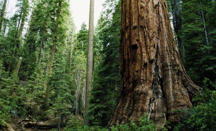 Birlikte orman banyosu yapalım mı tatlı şey?