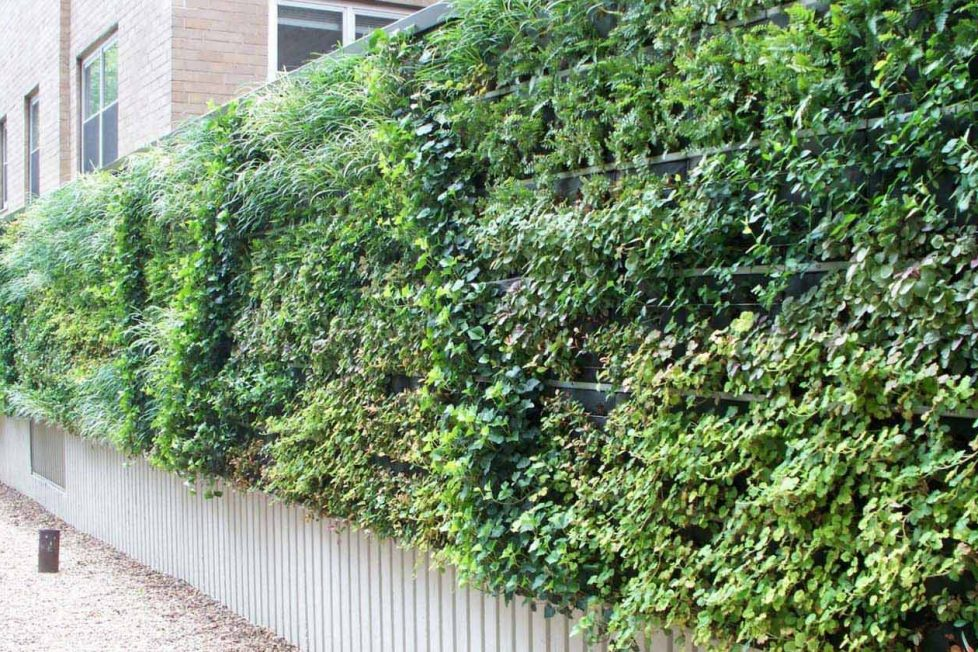 Betonlar içinde bir canlılık: Yaşayan duvar