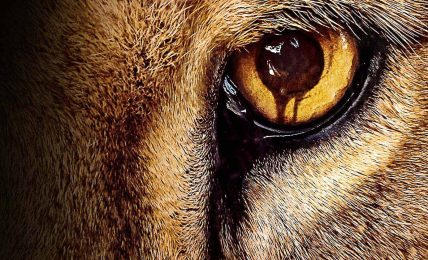 Hayvanların dünyayı geri alma mücadelesi: Zoo