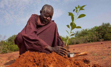 Tek başına çölleşmeyi durduran adam: Yacouba Sawadogo