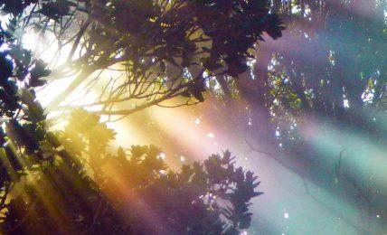 Şamanizm, anarşi ve dünyanın sonu