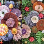 Nature Medleys: Mantar ve bitkinin renkli dansı
