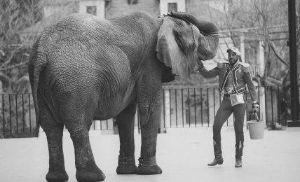 İnsanlar hayvanların efendisi değildir