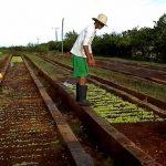 Küba'nın organik devrimi