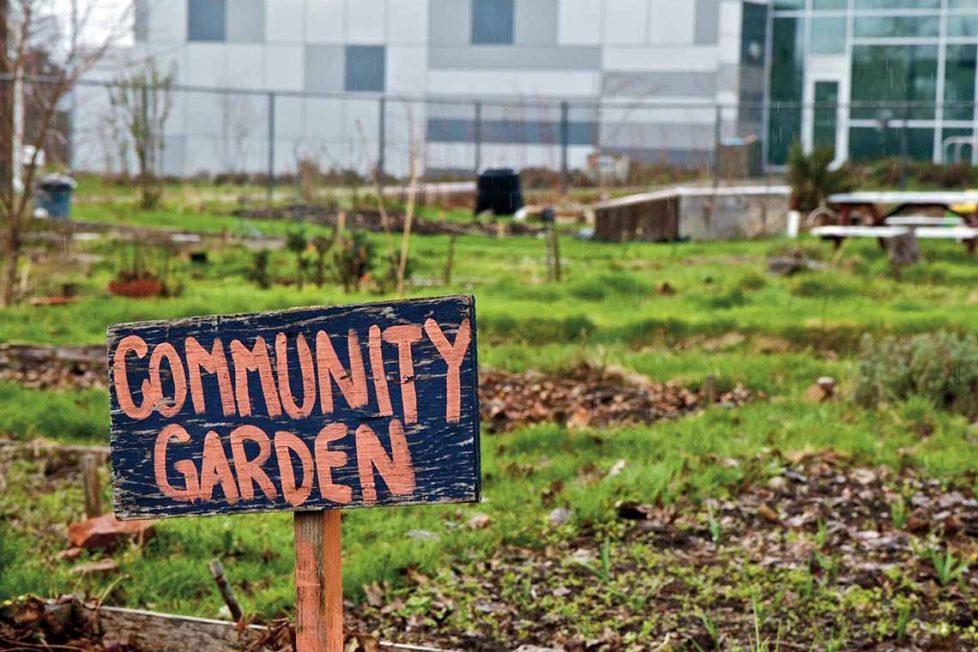 Yerel yöntemlerle iklim ve açlık mücadelesi vermek: Kent bahçeleri