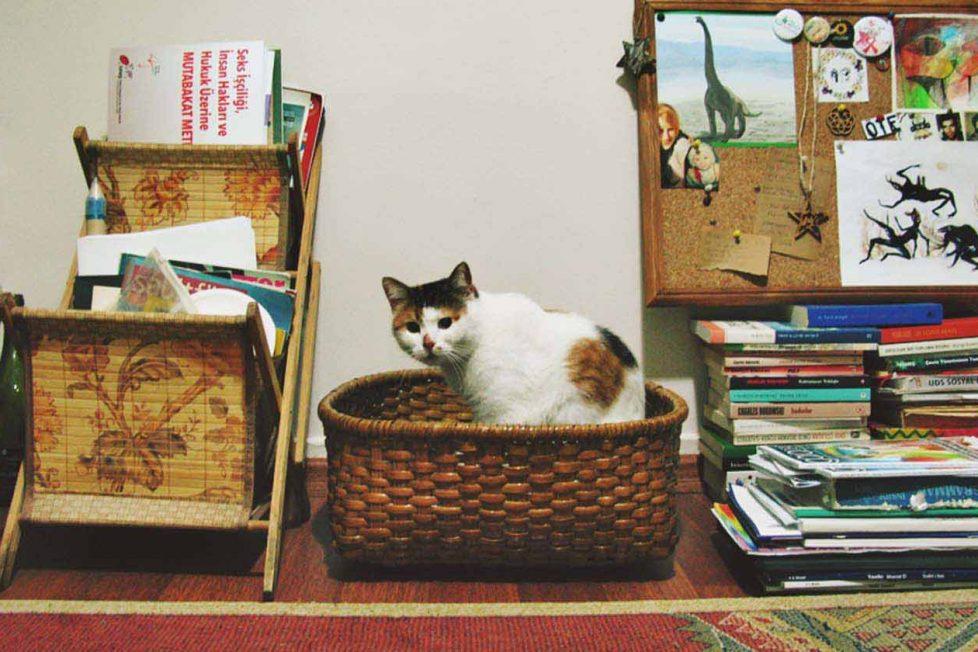 Çılgın bir kedi ile nasıl başa çıkarsınız?