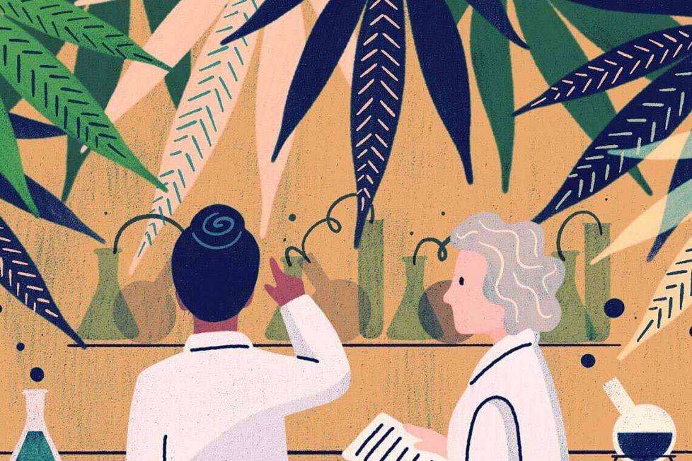 Kenevir olmayıp şifalı kannabinoidi içeren 8 bitki