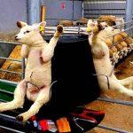 Bebek hayvanlara yapılan korkunç 7 şey