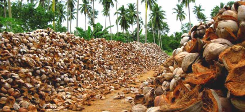 Yangına dayanıklı Hindistan cevizi kabuğu ahşabı ağaç yerine kullanılabilir