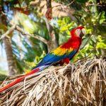 Kosta Rika, 2021'e kadar Dünya'nın plastiksiz ve sıfır karbon ilk ülkesi olmayı hedefliyor