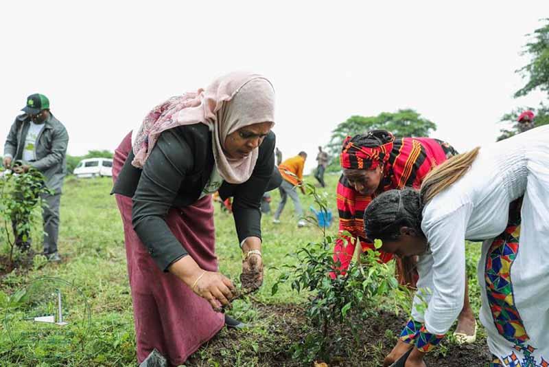 Etiyopya, bir günde 350 milyondan fazla ağaç dikerek rekor kırdı