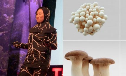 Infinity Burial Suit: Mantarlı ölüm giysisi, ölü bir bedeni temiz komposta dönüştürüyor