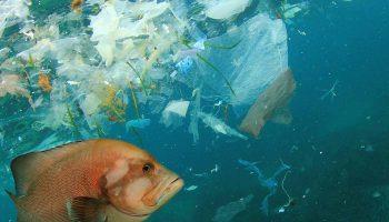 İrlandalı genç sudan mikroplastik maddeleri ayıklayan projesiyle global bilim ödülü kazandı