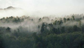 Ormanın Ruhu