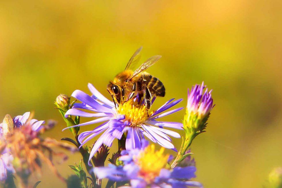 Brezilya'da 3 ay içinde 500 milyon arı öldü