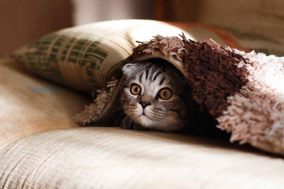 Kedilerden gelerek beynimizi ve dürtülerimizi yönetebilen parazit: Toxoplasma gondii