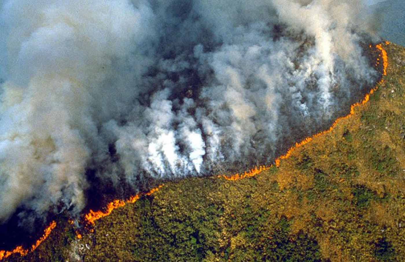 """Amazon'daki ormansızlaştırma oranı """"son radde""""de"""