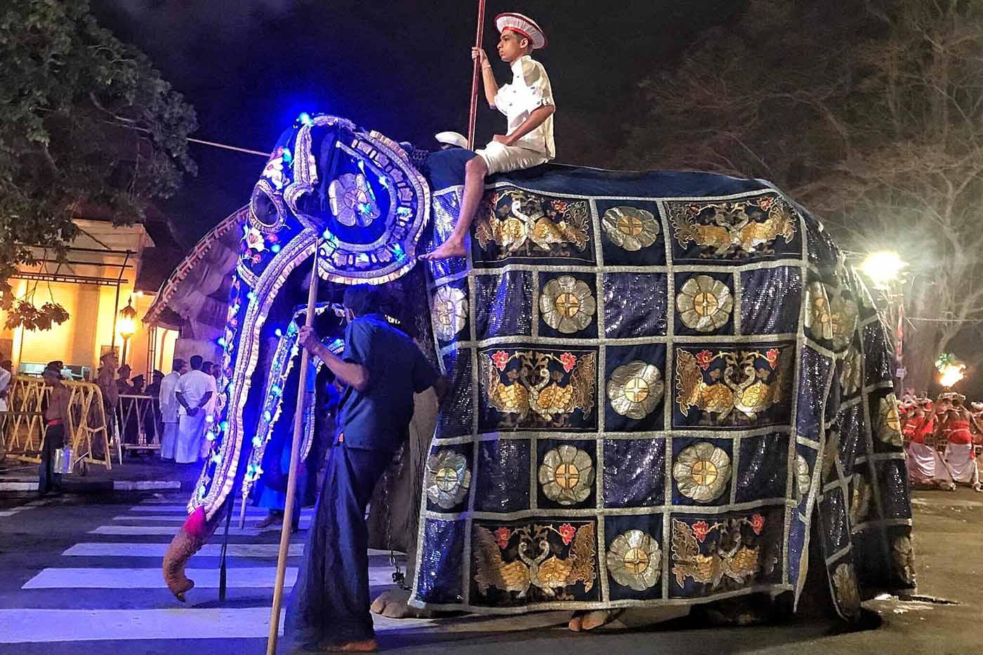 70 yaşındaki filin bir deri bir kemik hali festivalde kostümle saklandı