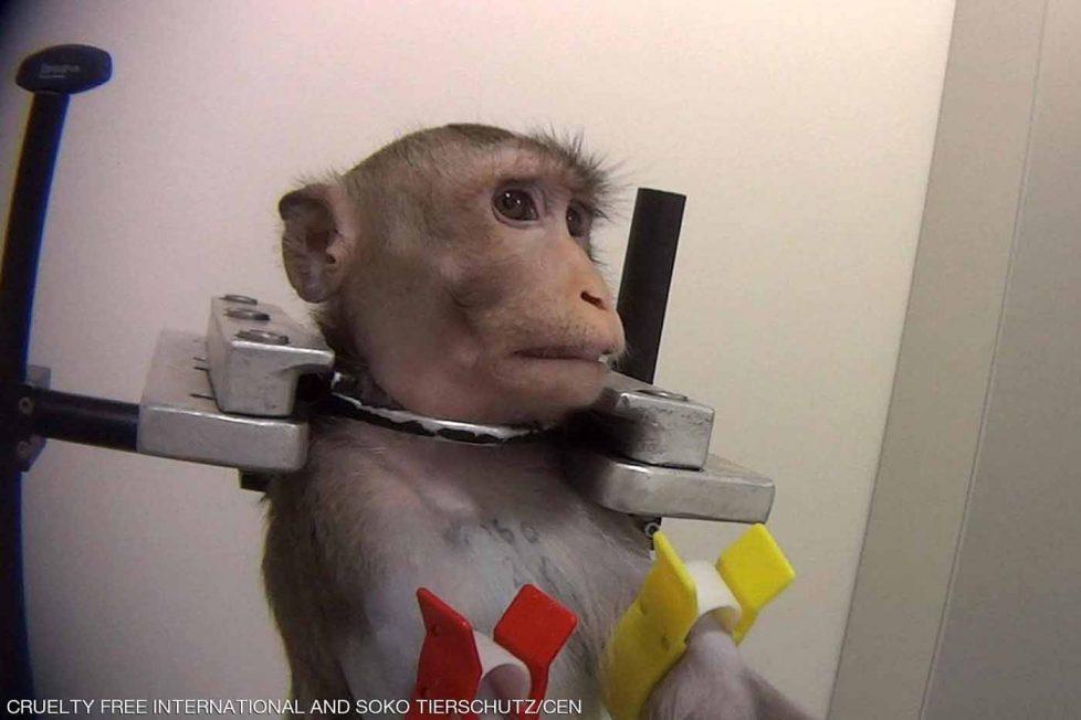 Almanya'daki hayvan deneylerinin korkunç görüntüleri sızdı