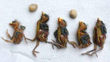 Ölü kuşların yuvası, DDT dahil olmak üzere 36 farklı pestisit içeriyor