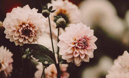 Sevginin ruhu- sevgisizliğe dair