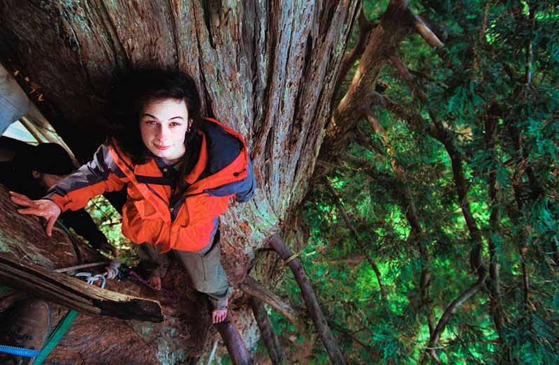 """Julia """"Butterfly"""" Hill ve 783 gün üzerinde yaşadığı sekoya ağacı Luna"""