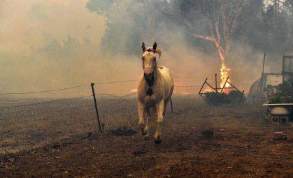 Avustralya yangınları durdurulamıyor; işte bilmeniz gerekenler