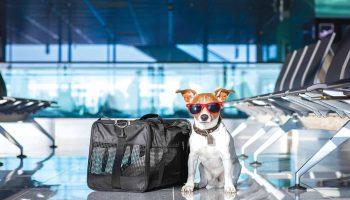 Evcil hayvanlar artık otobüste seyahat edebilecek