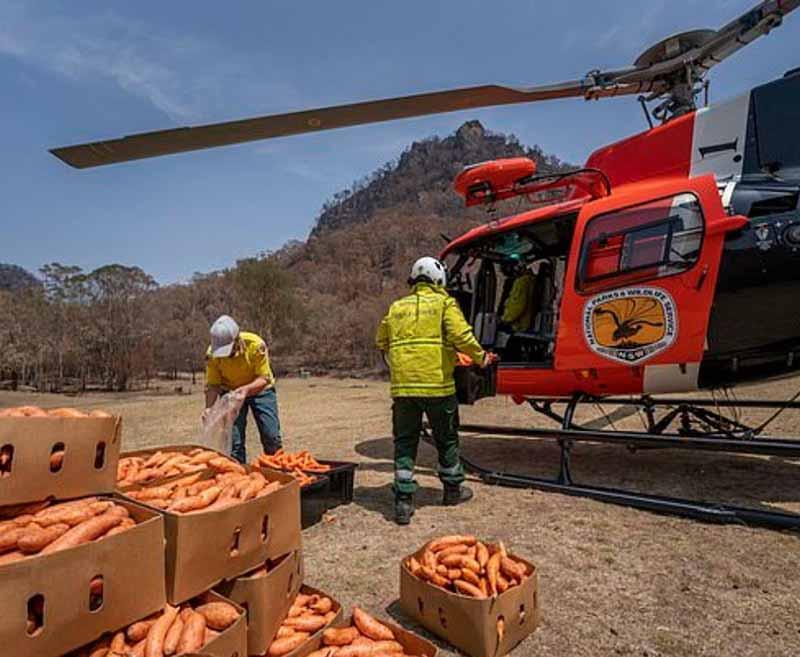 Hayatta kalabilmeleri için kaya valabileri helikopterle havuç ve patates atıldı