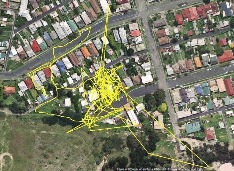 GPS takarak kedilerin nerelerde maceralar yaşadığını gözlemlemişler