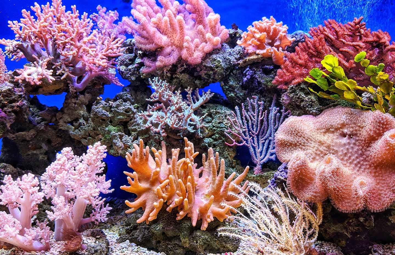 Sualtındaki hoparlörler ölmekte olan mercan resiflerini canlandırmaya yardımcı oluyor