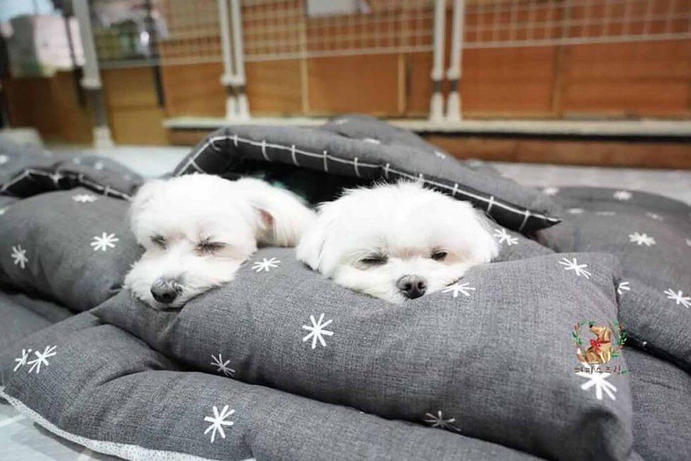 Bu yavru köpekler gününüzü güzelleştirecek