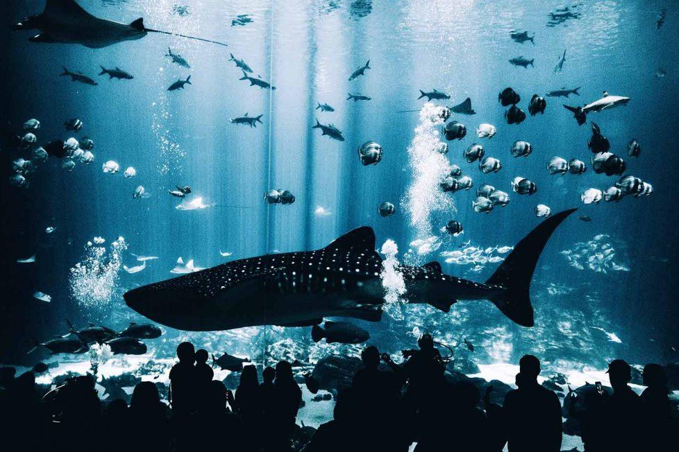 Kanada balina ve yunus esaretini yasakladı