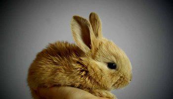 Cruelty-free hareketi etkisi: Kaliforniya hayvanlarla test edilen ürünleri yasaklayan ilk eyalet oldu