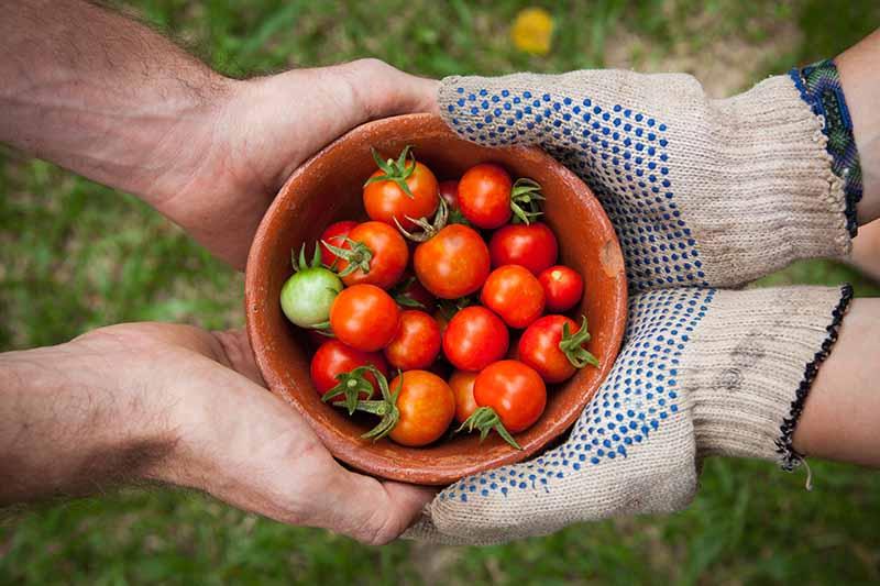Yeni başlayanlar için bahçecilik
