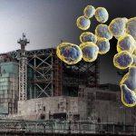 Radyasyon yiyen mantar bir çözüm olabilir mi?
