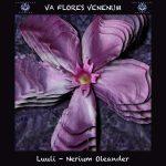 11. Luuli - Nerium Oleander
