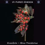 14. Elvenfolk - Abrus precatorius