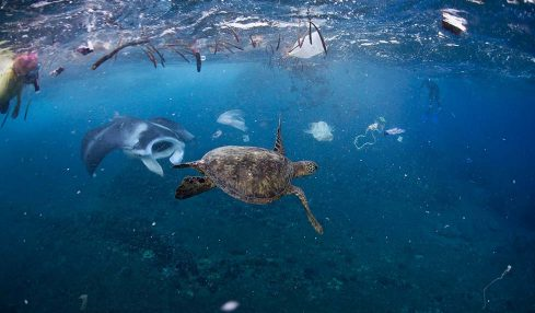 Derin deniz plastikleri onlarca yıl bile sağlam kalabiliyor
