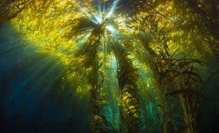 Yeni keşfedilen agresif su yosunu tüm mercan resifini öldürdü