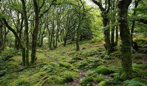 Ormanlar neden önemli?