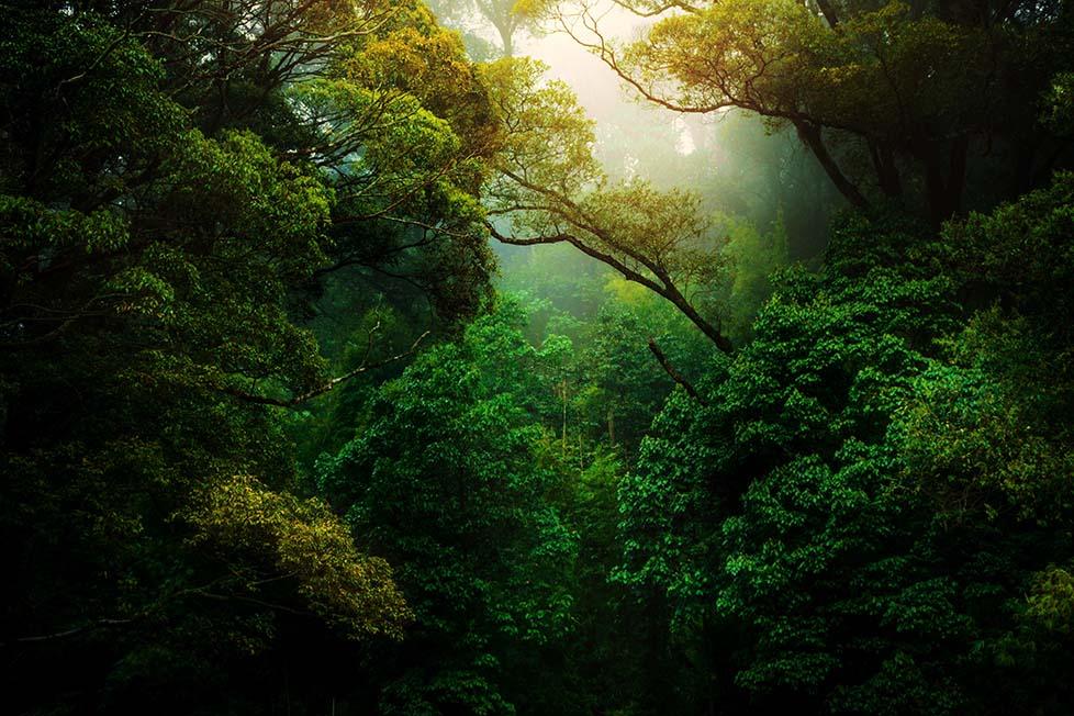 50 saatlik doğa sesi, size neşe ve huşu getirecek