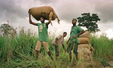 COVID-19 çocuk işçiliğini artırıyor